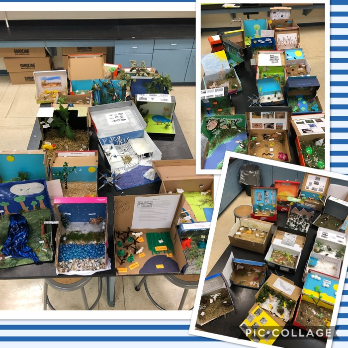 """THS Biology students worked hard to create a shoebox diorama that depicts a biome showing a natural habitat using notes and research completed in class. They had to think ""outside the box"" and not use anything already made! Job well done."""